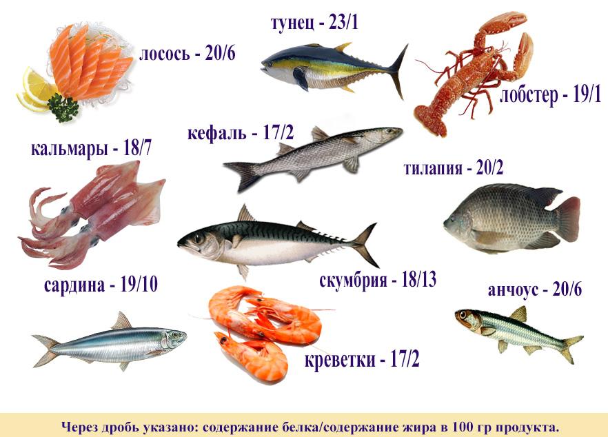 рыба и белок