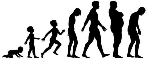 Этапы развития человека