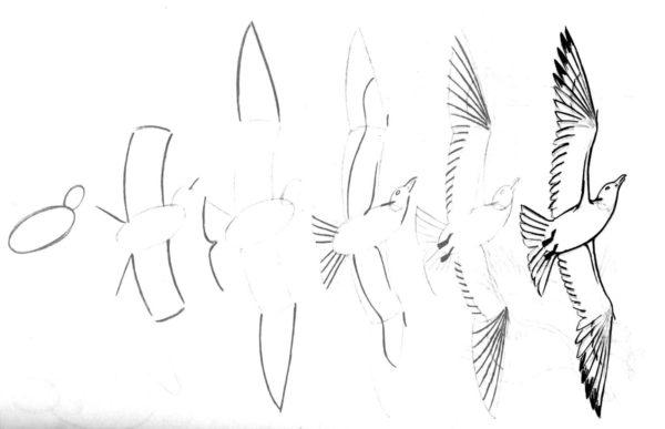 Схема рисование птиц по этапно