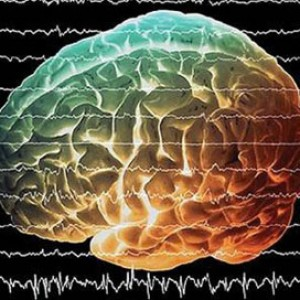 мозг альфа ритм